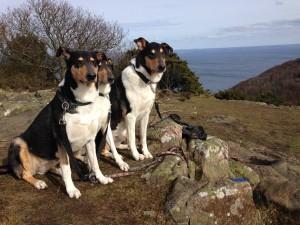 Fiona, Clara och Angus
